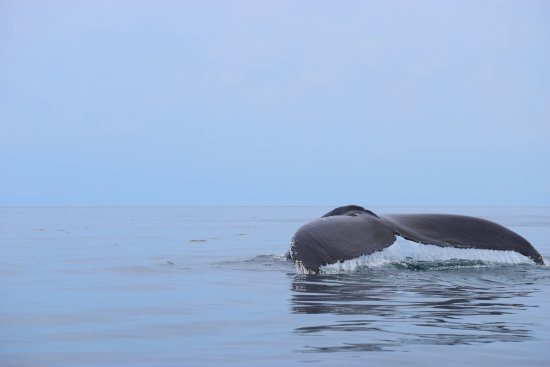 Brier Island Whale and Seabird Cruises: Bay of Fundy