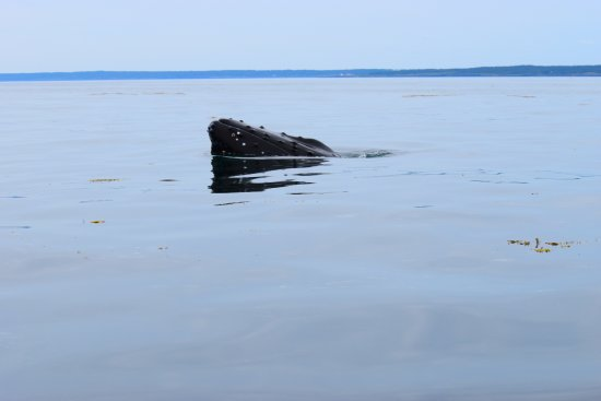 Westport, Canadá: Humpback Whale
