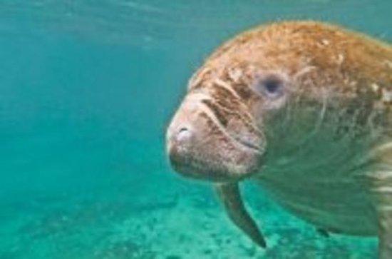 Private Tour: Custom Snorkeling Tour...