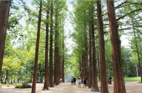 Full-Day Nami Island and Chuncheon...