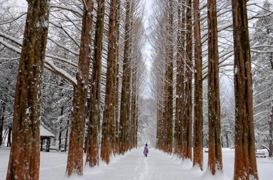 Full-Day Nami Island and Daemyung