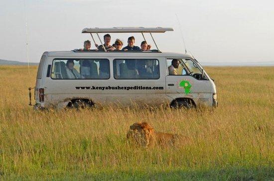 8 dagar Maasai mara, Nakuru, Amboseli ...