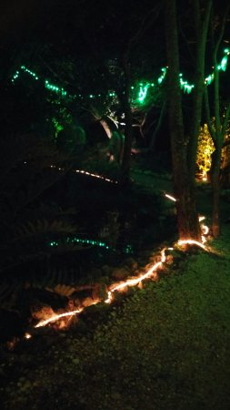 Blooming Lights At Selby Picture Of Marie Botanical