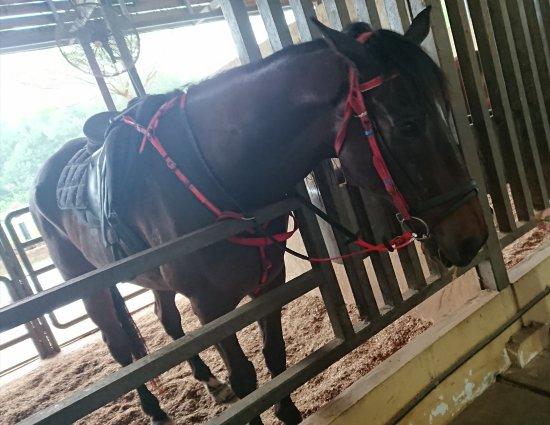 Cowboy town. Можно кормить лошадей всего за 2 RM
