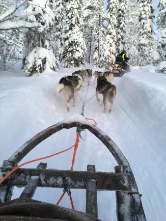 Lapland Hotel Pallas: Husky Safari