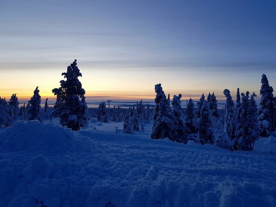 Lapland Hotel Pallas: Snowy Wilderness Lodge grounds