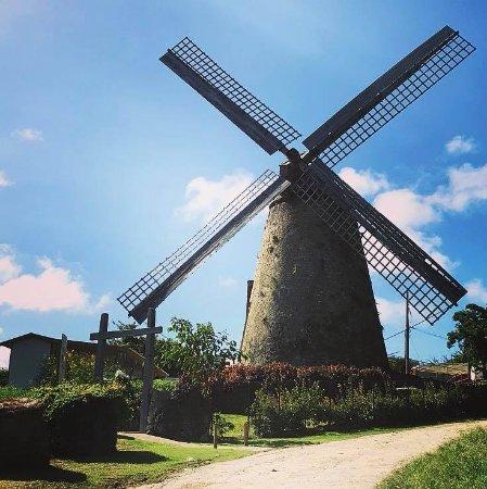 Morgan Lewis Sugar Mill: Morgan Lewis Windmill
