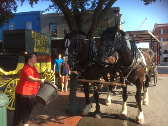 Carriage Tours of Savannah : Refreshments