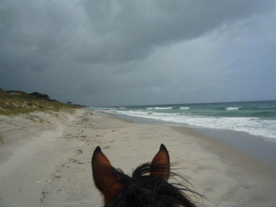 Pakiri Beach Horse Rides - Day Tours Foto
