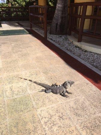 animal dans l'hotel - Picture of Luxury Bahia Principe ... |Grand Bahia Principe Tulum Animals