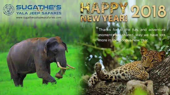 sugathes yala jeep safaris happy new year to all nature lover 2018