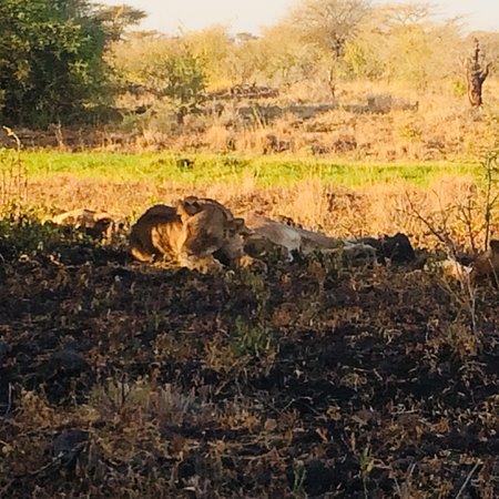 Meru National Park, Kenia: photo1.jpg