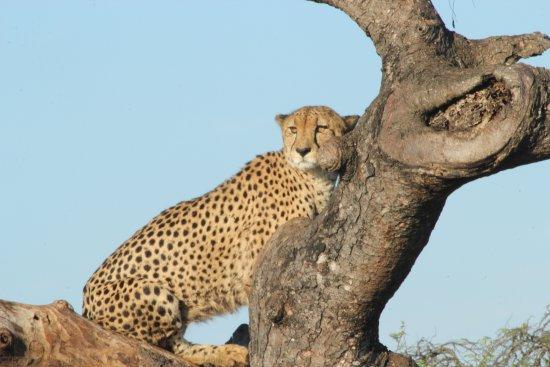 Cheetah Hotel Rooms