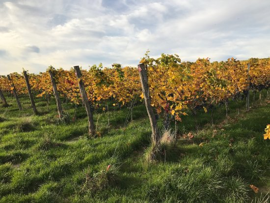 Winnica Jura