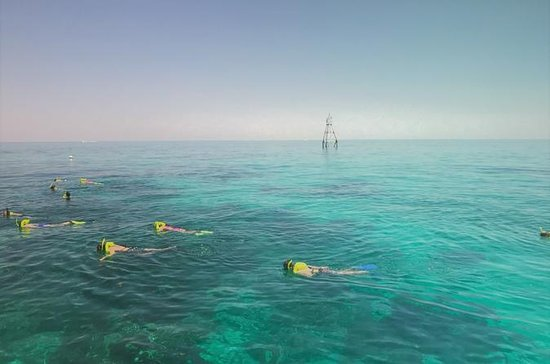 4-Hour Snorkel Charter from Key Largo