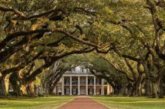 Oak Alley or Laura Plantation Tour from New Orleans