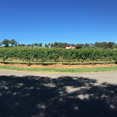 Fergusson Winery and Restaurant: New Years Day at Fergusson Winery