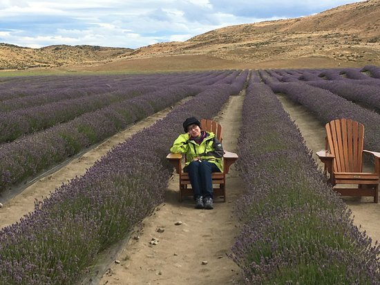 Mackenzie District, New Zealand: at the lavender farm