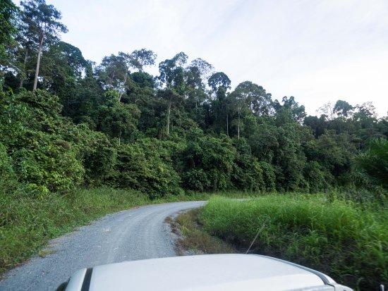 Lahad Datu, Malezya: evening drive