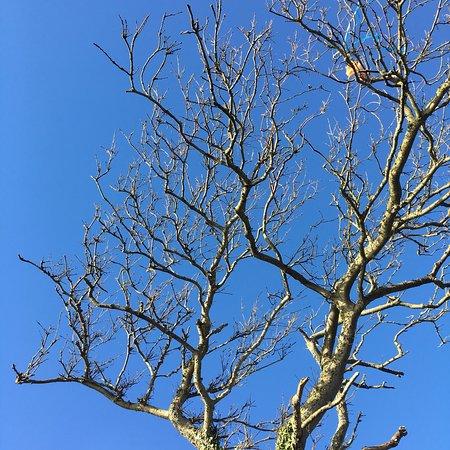 Climping, UK: photo2.jpg