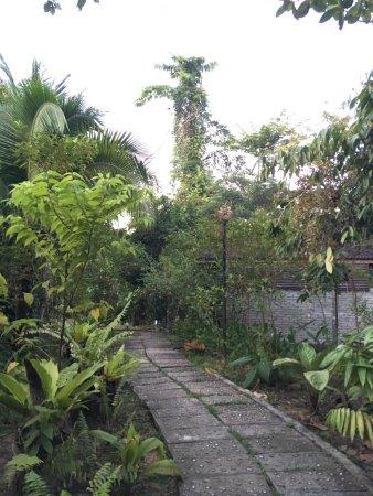 Sepilok Forest Edge Resort: photo0.jpg