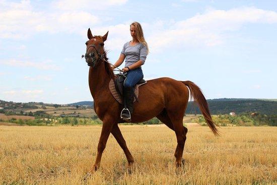 Bare, Serbie: Equestrian adventure Serbia