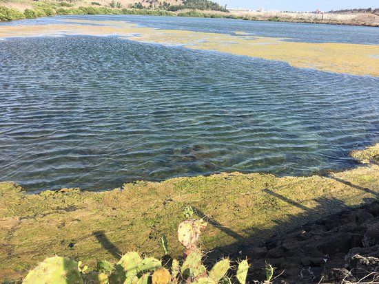 Caiyuan Wetlands