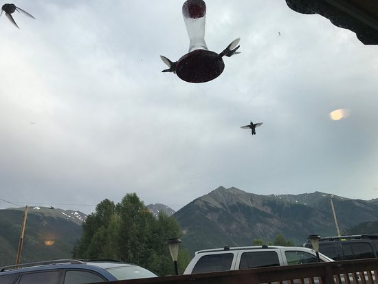 Twin Lakes, CO: View from our table. There were actually dozens of hummingbirds but I was trying to be unobtrusi