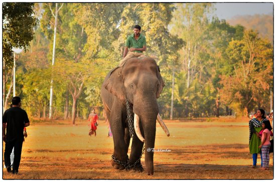 Shimoga District, อินเดีย: Sakrebailu Elephant Camp
