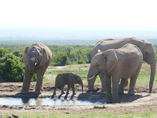 Addo , thank you Mike, for bringing us here