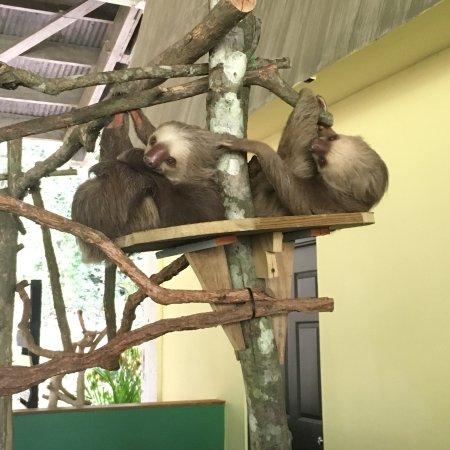 Gamboa Rainforest Resort Aerial Tram Tour: photo2.jpg