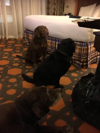 Kimpton Hotel Monaco Portland: We love the pet-friendly policy - pets are not just tolerated, they are welcomed.