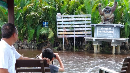 how to get to tanjung puting national park