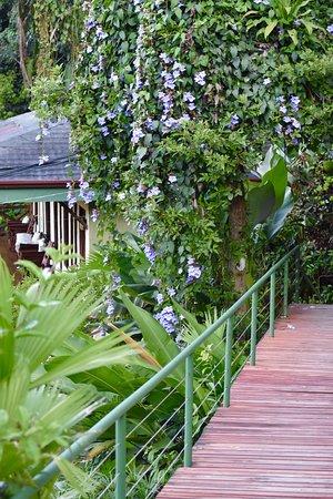Tabulia Tree Hotel & Villas Photo