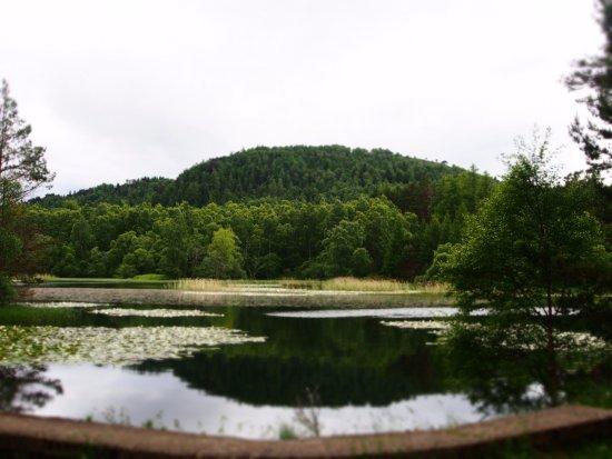 Aviemore, UK: .Waterlillies