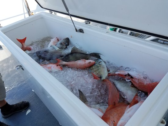 On the boat picture of sea legs deep sea fishing for Hollywood florida fishing