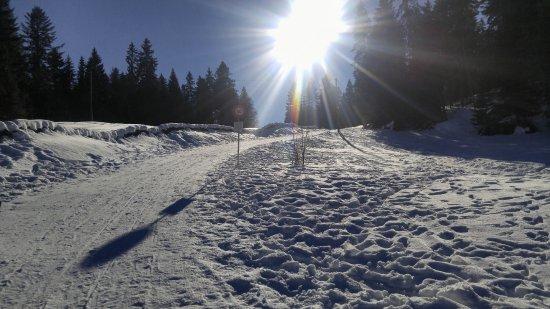 Vaud, Suiza: Солнечный день в парке. А в Лозанне - это 20 мин. езды дождь.
