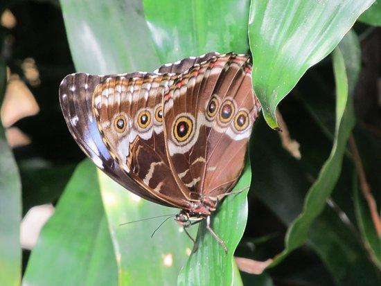Victoria Butterfly Gardens Photo