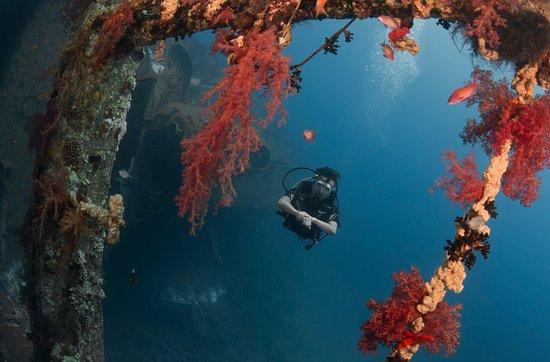 Deep blue dive center akaba aktuelle 2018 lohnt es sich - Dive deep blue ...