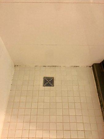 W Atlanta - Midtown: moldy shower floor