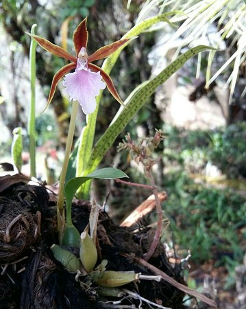 Orquideas Moxviquil: IMG_20180101_174728_342_large.jpg