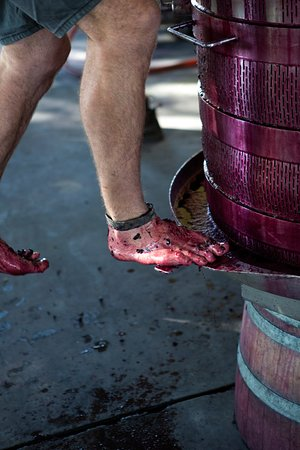 Barossa Valley, Australia: Keeping the tradition at Loose End Gibson Wines (Dragan images)