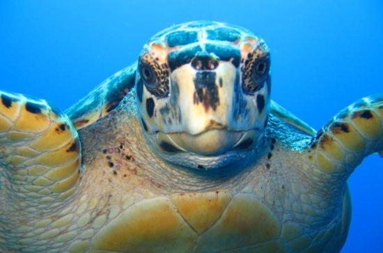 Snorkel Eco Tour