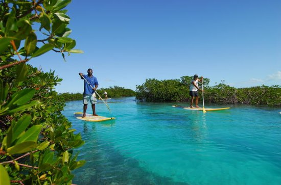 Passeio ecológico Stand Up Paddleboard