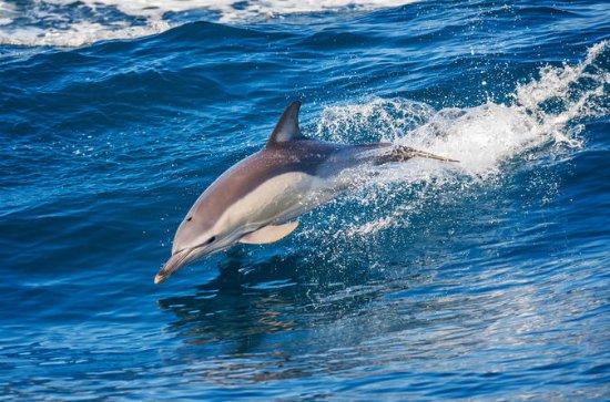 Excursión para ver delfines y la...