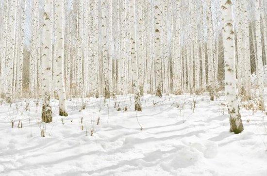 Inje White Bitch Tree Hiking Tour
