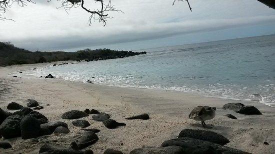 Puerto Baquerizo Moreno, Ekwador: Playa Baquerizo