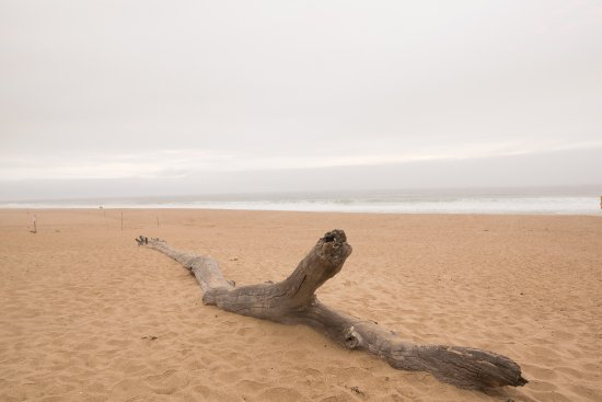Santa Maria, CA: A beach not covered in towels but surrounded by serenity at the Guadalupe Dunes Preserve.