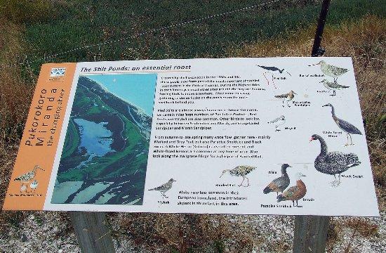 Miranda, Nova Zelândia: Silt Pond info
