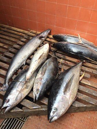 Mercado de Peixe: Frisch angelieferter Thunfisch